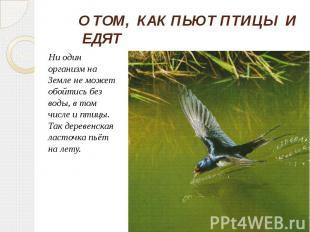 О ТОМ, КАК ПЬЮТ ПТИЦЫ И ЕДЯТ Ни один организм на Земле не может обойтись без вод