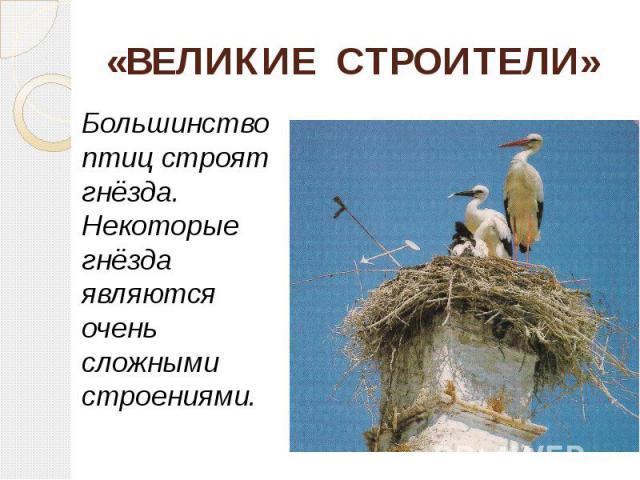 «ВЕЛИКИЕ СТРОИТЕЛИ» Большинство птиц строят гнёзда. Некоторые гнёзда являются очень сложными строениями.