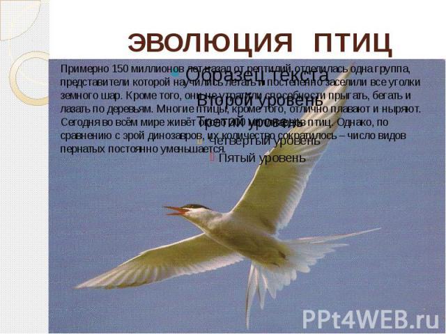 ЭВОЛЮЦИЯ ПТИЦ