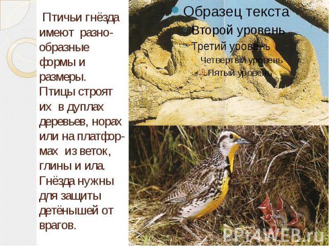 Птичьи гнёзда имеют разно-образные формы и размеры. Птицы строят их в дуплах деревьев, норах или на платфор-мах из веток, глины и ила. Гнёзда нужны для защиты детёнышей от врагов.