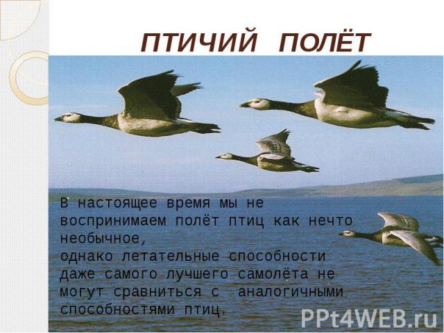 ПТИЧИЙ ПОЛЁТ