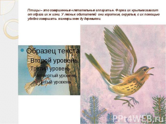 Птицы – это совершенные «летательные аппараты». Форма их крыльев зависит от образа их жизни. У лесных обитателей они короткие, округлые, с их помощью удобно совершать маневры между деревьями.