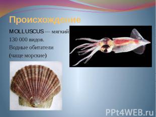 Происхождение MOLLUSCUS — мягкий. 130 000 видов. Водные обитатели (чаще морские)