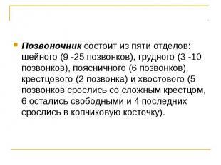 Позвоночник состоит из пяти отделов: шейного (9 -25 позвонков), грудного (3 -10