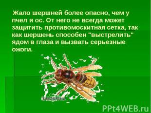 Жало шершней более опасно, чем у пчел и ос. От него не всегда может защитить про