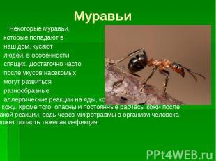 Муравьи Некоторые муравьи, которые попадают в наш дом, кусают людей, в особеннос