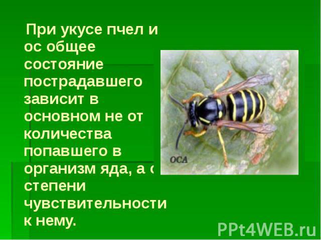При укусе пчел и ос общее состояние пострадавшего зависит в основном не от количества попавшего в организм яда, а от степени чувствительности к нему. При укусе пчел и ос общее состояние пострадавшего зависит в основном не от количества попавшего в о…