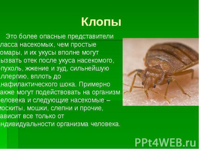 Клопы Это более опасные представители класса насекомых, чем простые комары, и их укусы вполне могут вызвать отек после укуса насекомого, опухоль, жжение и зуд, сильнейшую аллергию, вплоть до анафилактического шока. Примерно также могут подействовать…