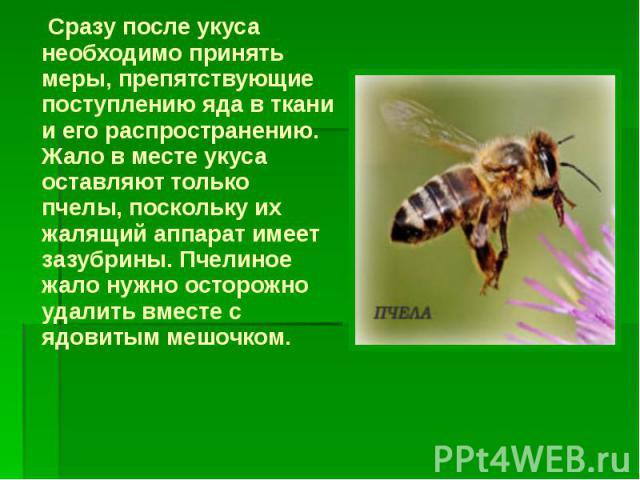 Сразу после укуса необходимо принять меры, препятствующие поступлению яда в ткани и его распространению. Жало в месте укуса оставляют только пчелы, поскольку их жалящий аппарат имеет зазубрины. Пчелиное жало нужно осторожно удалить вместе с ядовитым…