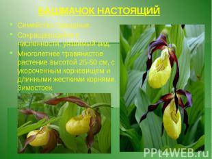 БАШМАЧОК НАСТОЯЩИЙ Семейство Орхидные. Сокращающийся в численности, уязвимый вид