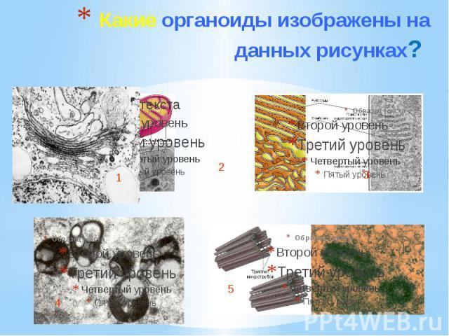 Какие органоиды изображены на данных рисунках?
