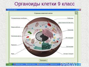 Органоиды клетки 9 класс