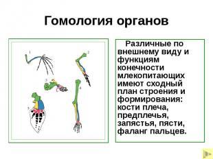 Гомология органов Различные по внешнему виду и функциям конечности млекопитающих