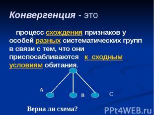 Конвергенция - это процесс схождения признаков у особей разных систематических г