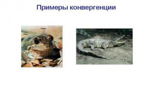 Примеры конвергенции