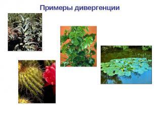 Примеры дивергенции