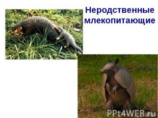 Неродственные млекопитающие