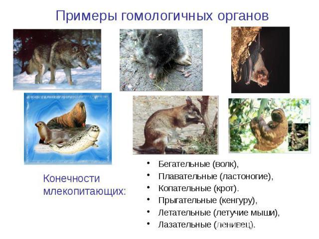 Бегательные (волк), Бегательные (волк), Плавательные (ластоногие), Копательные (крот). Прыгательные (кенгуру), Летательные (летучие мыши), Лазательные (ленивец).