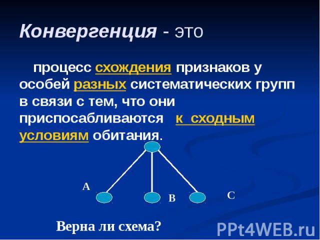 Конвергенция - это процесс схождения признаков у особей разных систематических групп в связи с тем, что они приспосабливаются к сходным условиям обитания.