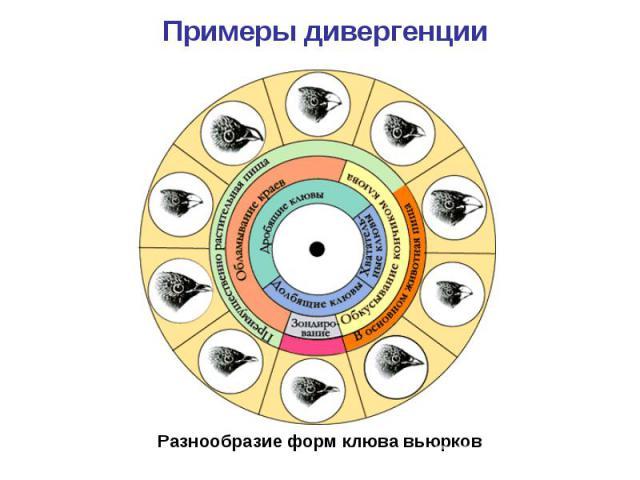 Разнообразие форм клюва вьюрков