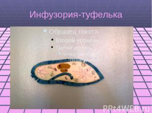 Инфузория-туфелька