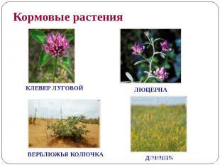 Кормовые растения