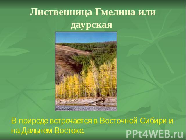 Лиственница Гмелина или даурская В природе встречается в Восточной Сибири и на Дальнем Востоке.
