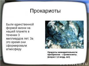 Прокариоты