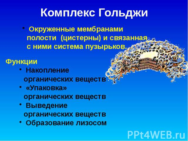 Комплекс Гольджи
