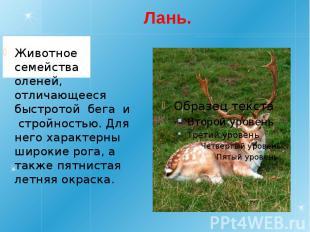 Лань. Животное семейства оленей, отличающееся быстротой бега и стройностью. Для