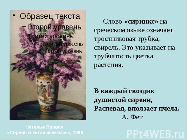 Слово «сиринкс» на греческом языке означает тростниковая трубка, свирель. Это указывает на трубчатость цветка растения. В каждый гвоздик душистой сирени, Распевая, вползает пчела. А. Фет