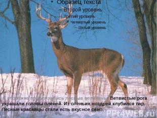К сторожке приблизились лесные великаны. Ветвистые рога украшали головы оленей.