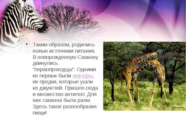 """Таким образом, родились новые источники питания. В новорожденную Саванну двинулись """"первопроходцы"""". Одними из первых былижирафы, их предки, которые ушли из джунглей. Пришло сюда и множество антилоп. Для них саванна была раем. Здесь т…"""