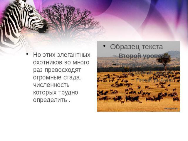 Но этих элегантных охотников во много раз превосходят огромные стада, численность которых трудно определить .