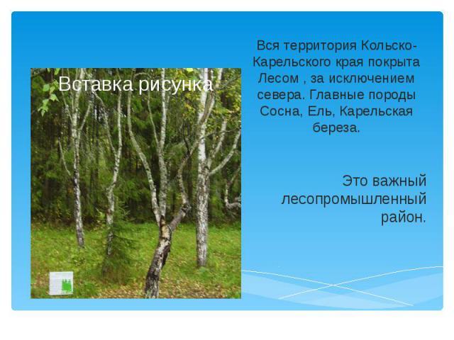 Вся территория Кольско-Карельского края покрыта Лесом , за исключением севера. Главные породы Сосна, Ель, Карельская береза. Это важный лесопромышленный район.