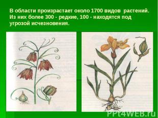 В области произрастает около 1700 видов растений. Из них более 300 - редкие, 100