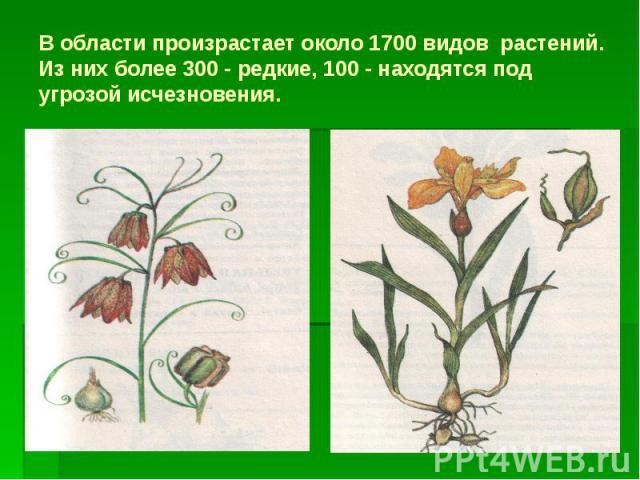 В области произрастает около 1700 видов растений. Из них более 300 - редкие, 100 - находятся под угрозой исчезновения.