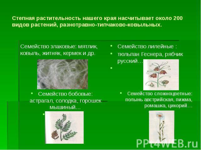 Степная растительность нашего края насчитывает около 200 видов растений, разнотравно-типчаково-ковыльных. Семейство злаковые: мятлик, ковыль, житняк, кермек и др.