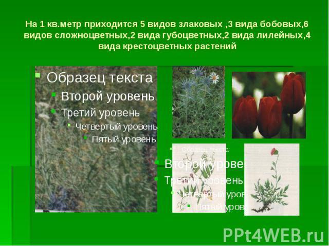 На 1 кв.метр приходится 5 видов злаковых ,3 вида бобовых,6 видов сложноцветных,2 вида губоцветных,2 вида лилейных,4 вида крестоцветных растений
