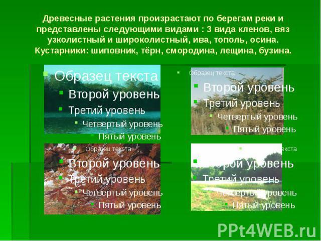 Древесные растения произрастают по берегам реки и представлены следующими видами : 3 вида кленов, вяз узколистный и широколистный, ива, тополь, осина. Кустарники: шиповник, тёрн, смородина, лещина, бузина.