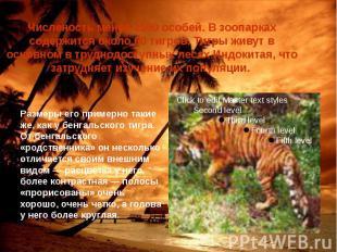Численость менее 1500 особей. В зоопарках содержится около 60 тигров. Тигры живу