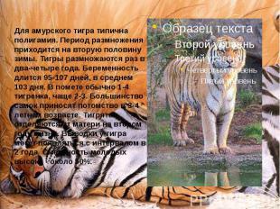Для амурского тигра типична полигамия. Период размножения приходится на вторую п