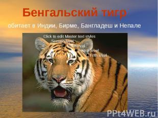 Бенгальский тигр обитает в Индии, Бирме, Бангладеш и Непале