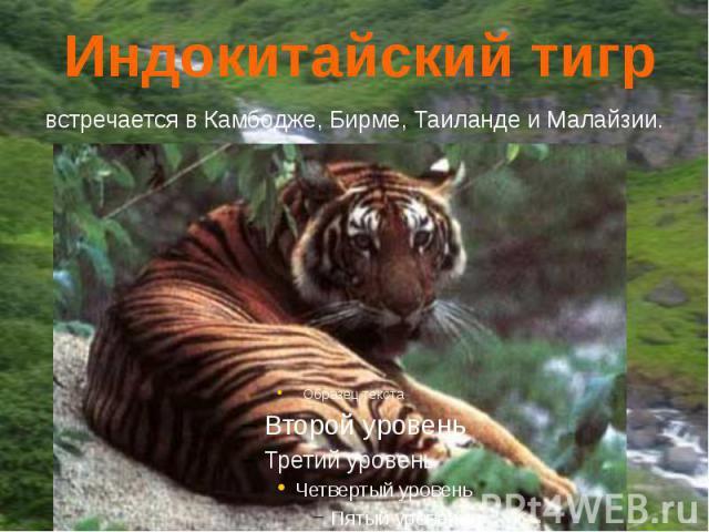 Индокитайский тигр встречается в Камбодже, Бирме, Таиланде и Малайзии.