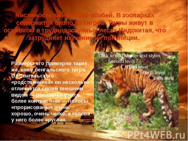 Численость менее 1500 особей. В зоопарках содержится около 60 тигров. Тигры живут в основном в труднодоступных лесах Индокитая, что затрудняет изучение их популяции.