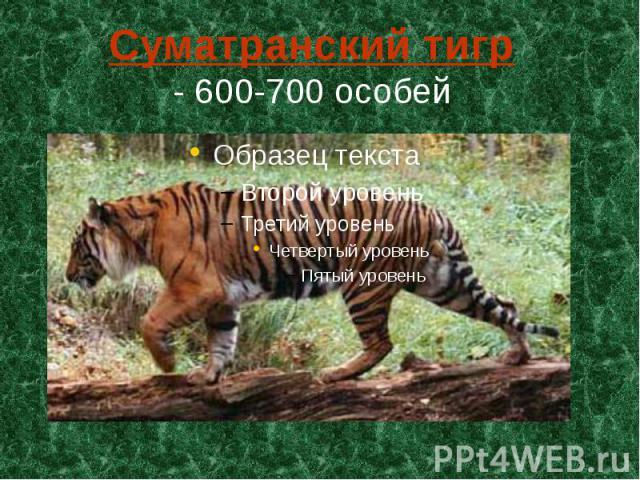 Суматранский тигр - 600-700 особей