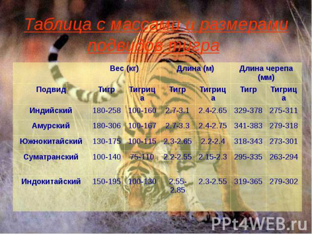 Таблица с массами и размерами подвидов тигра
