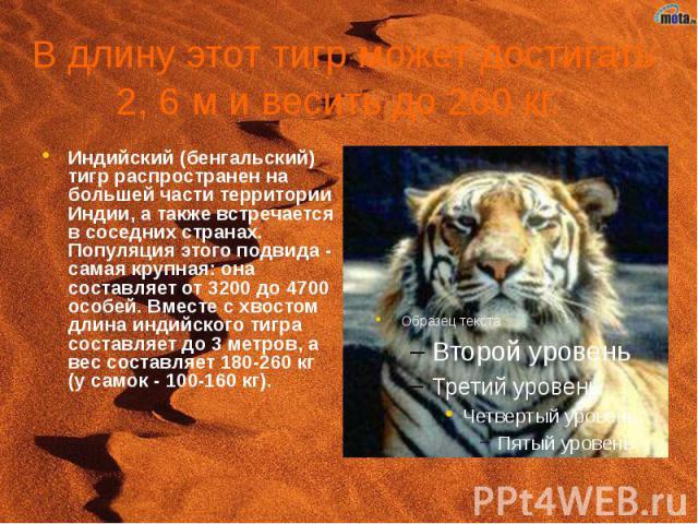 В длину этот тигр может достигать 2, 6 м и весить до 260 кг. Индийский (бенгальский) тигр распространен на большей части территории Индии, а также встречается в соседних странах. Популяция этого подвида - самая крупная: она составляет от 3200 до 470…