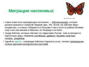 Миграции насекомых Самое известное мигрирующее насекомое — бабочка-монарх, котор