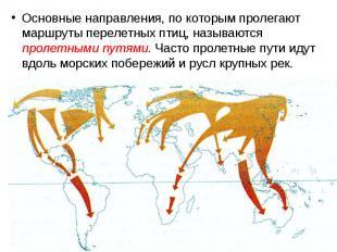 Основные направления, по которым пролегают маршруты перелетных птиц, называются